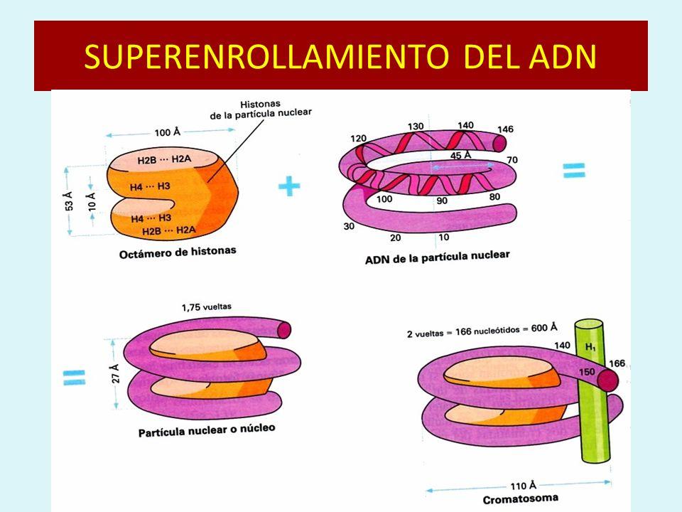 SUPERENROLLAMIENTO DEL ADN