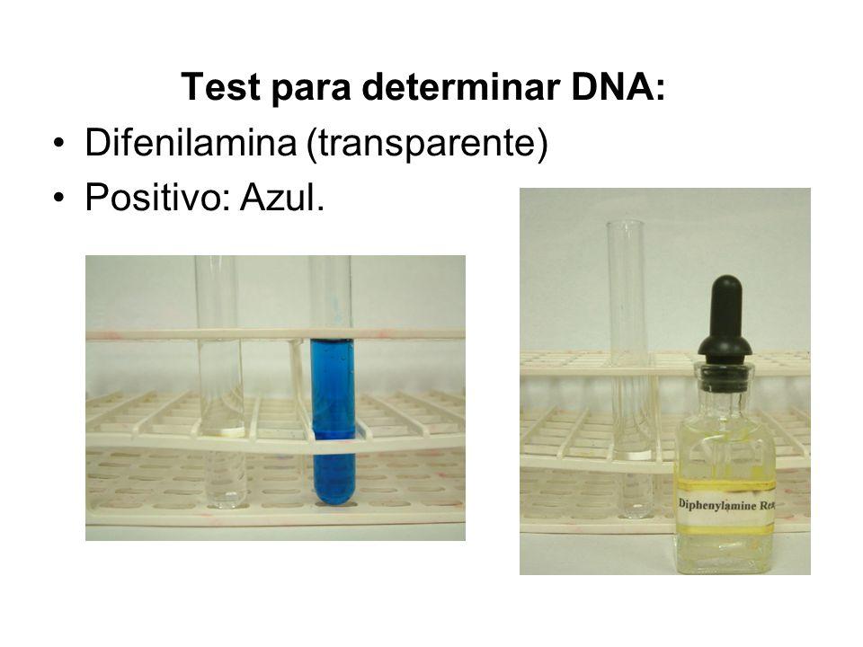 Test para determinar DNA: Difenilamina (transparente) Positivo: Azul.