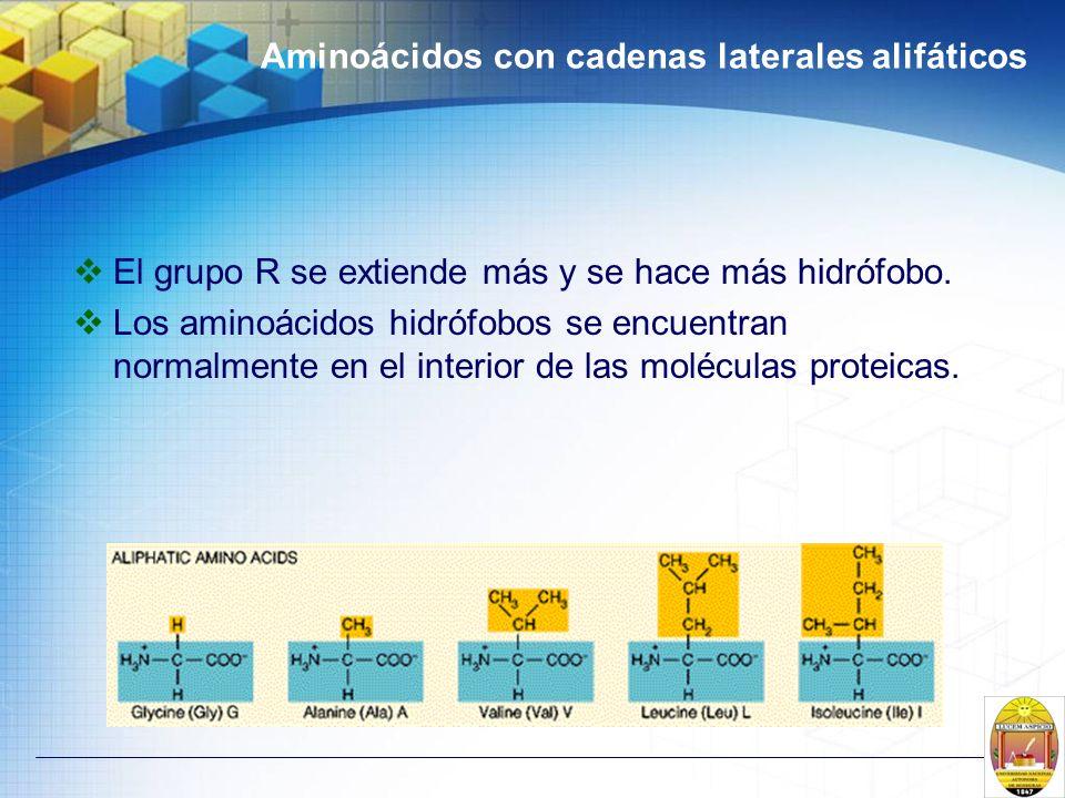 Aminoácidos con cadenas laterales alifáticos El grupo R se extiende más y se hace más hidrófobo. Los aminoácidos hidrófobos se encuentran normalmente