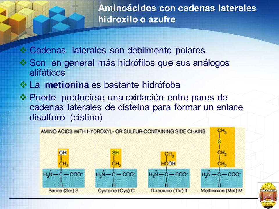 Aminoácidos con cadenas laterales hidroxilo o azufre Cadenas laterales son débilmente polares Son en general más hidrófilos que sus análogos alifático