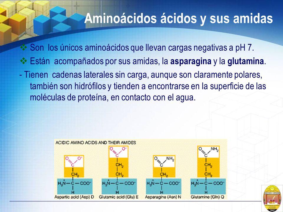 Aminoácidos ácidos y sus amidas Son los únicos aminoácidos que llevan cargas negativas a pH 7. Están acompañados por sus amidas, la asparagina y la gl