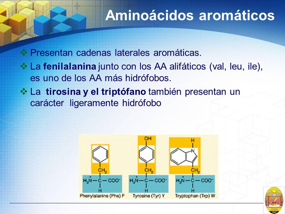 Aminoácidos aromáticos Presentan cadenas laterales aromáticas. La fenilalanina junto con los AA alifáticos (val, leu, ile), es uno de los AA más hidró