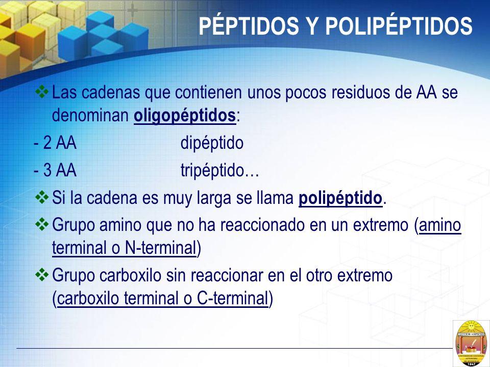 PÉPTIDOS Y POLIPÉPTIDOS Las cadenas que contienen unos pocos residuos de AA se denominan oligopéptidos : - 2 AA dipéptido - 3 AAtripéptido… Si la cade