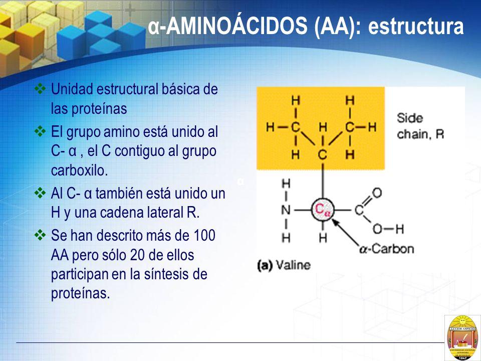 α-AMINOÁCIDOS (AA): estructura Unidad estructural básica de las proteínas El grupo amino está unido al C- α, el C contiguo al grupo carboxilo. Al C- α