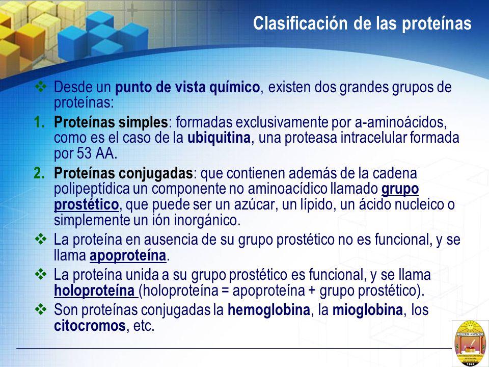Clasificación de las proteínas Desde un punto de vista químico, existen dos grandes grupos de proteínas: 1. Proteínas simples : formadas exclusivament