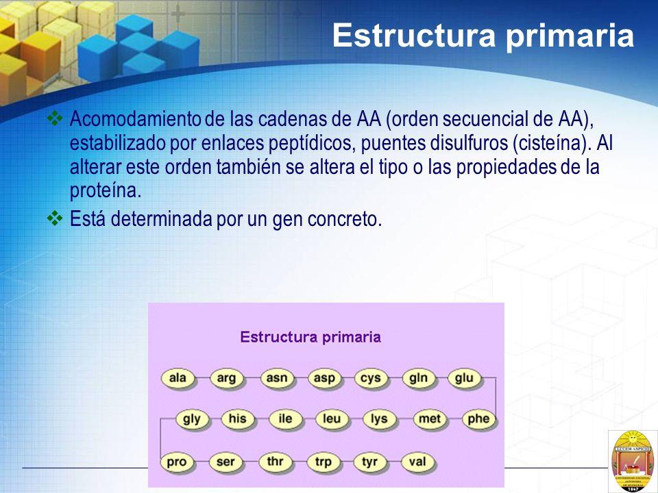 Estructura primaria Acomodamiento de las cadenas de AA (orden secuencial de AA), estabilizado por enlaces peptídicos, puentes disulfuros (cisteína). A
