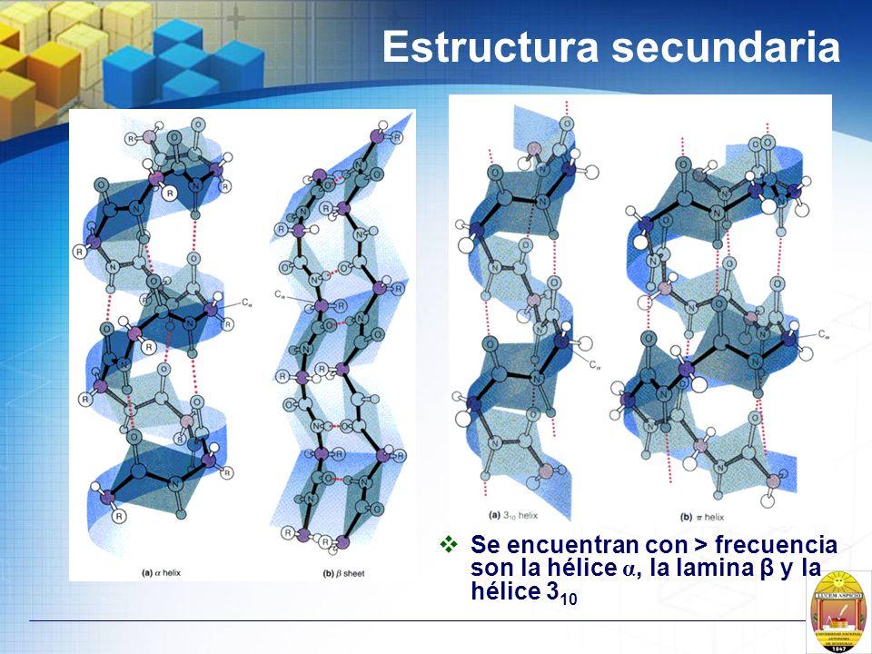 Estructura secundaria Se encuentran con > frecuencia son la hélice α, la lamina β y la hélice 3 10