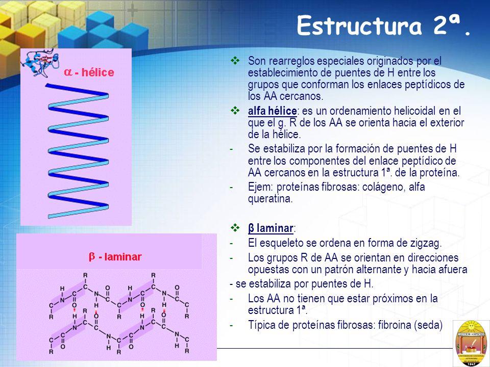 Estructura 2ª. Son rearreglos especiales originados por el establecimiento de puentes de H entre los grupos que conforman los enlaces peptídicos de lo