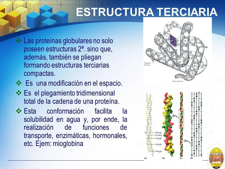 Las proteínas globulares no solo poseen estructuras 2ª. sino que, además, también se pliegan formando estructuras terciarias compactas. Es una modific