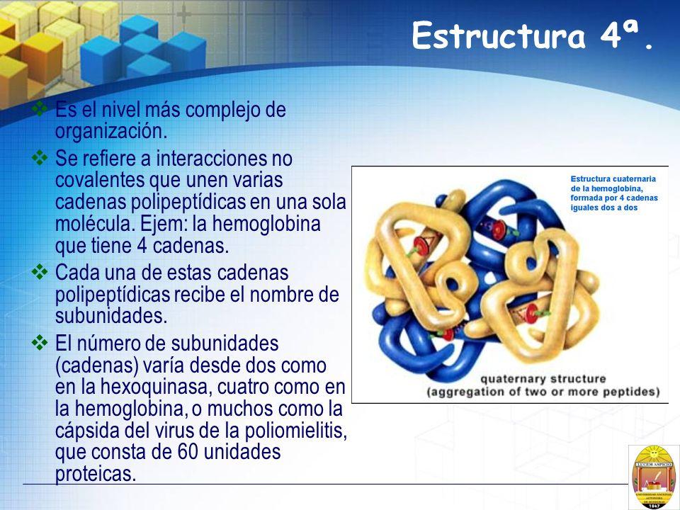 Estructura 4ª. Es el nivel más complejo de organización. Se refiere a interacciones no covalentes que unen varias cadenas polipeptídicas en una sola m