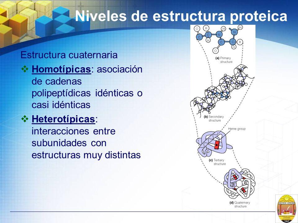 Niveles de estructura proteica Estructura cuaternaria Homotípicas: asociación de cadenas polipeptídicas idénticas o casi idénticas Heterotípicas: inte