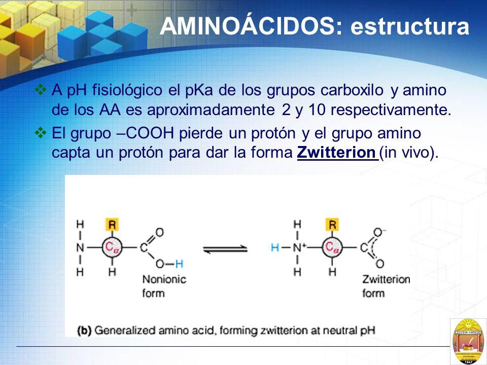 AMINOÁCIDOS: estructura A pH fisiológico el pKa de los grupos carboxilo y amino de los AA es aproximadamente 2 y 10 respectivamente. El grupo –COOH pi