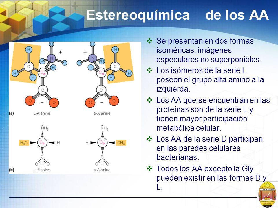 Estereoquímica de los AA Se presentan en dos formas isoméricas, imágenes especulares no superponibles. Los isómeros de la serie L poseen el grupo alfa