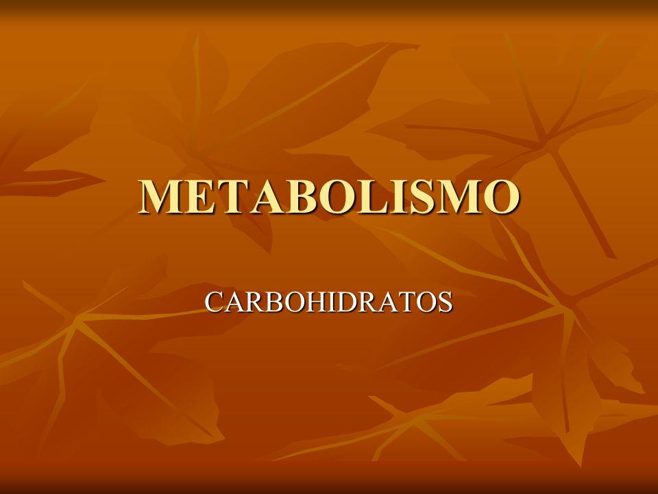METABOLISMO DE LOS CARBOHIDRATOS RUTA GLICOLITICA 4.