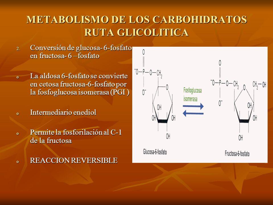 METABOLISMO DE LOS CARBOHIDRATOS RUTA GLICOLITICA 2.