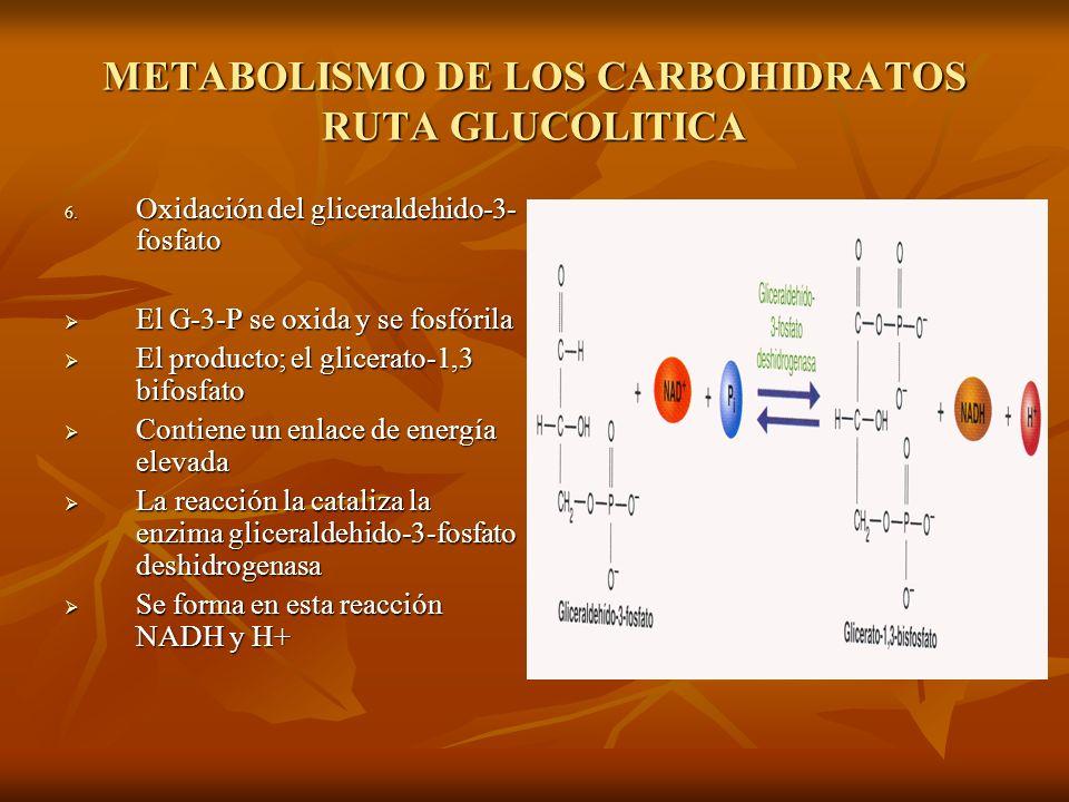 METABOLISMO DE LOS CARBOHIDRATOS RUTA GLUCOLITICA 6.