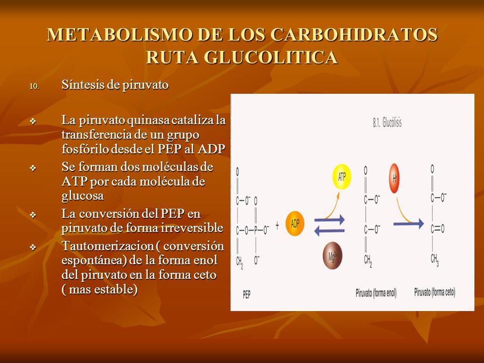 METABOLISMO DE LOS CARBOHIDRATOS RUTA GLUCOLITICA 10.