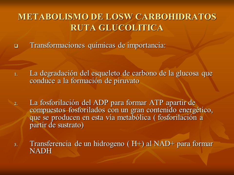 METABOLISMO DE LOSW CARBOHIDRATOS RUTA GLUCOLITICA Transformaciones químicas de importancia: Transformaciones químicas de importancia: 1.