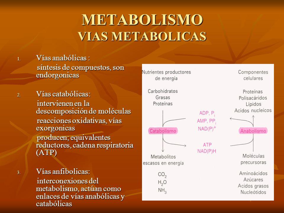 METABOLISMO VIAS METABOLICAS 1.