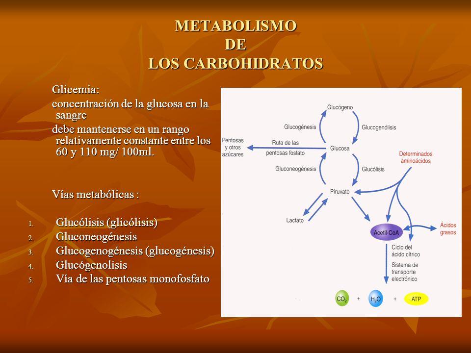 METABOLISMO DE LOS CARBOHIDRATOS GLUCOLISIS RUTA DE EMBDEM-MEYERHOF-PARNAS Palabras griegas: Palabras griegas: Glykys : dulce Glykys : dulce Lysis : destrucción Lysis : destrucción serie de reacciones químicas( 10) donde la glucosa (hexosa) es degradada a dos moléculas de piruvato (triosa) serie de reacciones químicas( 10) donde la glucosa (hexosa) es degradada a dos moléculas de piruvato (triosa) Ruta glucolitica resumida; Ruta glucolitica resumida; D- glucosa + 2ADP + 2 Pi + 2NAD+ ----2 piruvato + 2ATP + 2NADH + 2H+ + 2H20 D- glucosa + 2ADP + 2 Pi + 2NAD+ ----2 piruvato + 2ATP + 2NADH + 2H+ + 2H20