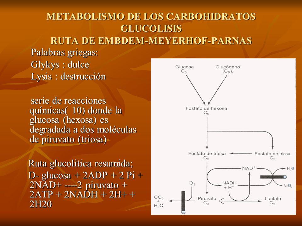 METABOLISMO DE LOS CARBOHIDRATOS GLUCOLISIS Citoplasma celular Citoplasma celular Única fuente de energía metabólica en : Única fuente de energía metabólica en : a) Eritrocito b) Cerebro c) Espermatozoides d) Medula renal Vía principal para el metabolismo de la glucosa como parte de la fructosa, galactosa, y oros derivados de la dieta Vía principal para el metabolismo de la glucosa como parte de la fructosa, galactosa, y oros derivados de la dieta Funciona en condiciones anaeróbicas Funciona en condiciones anaeróbicas