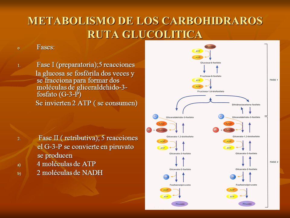 METABOLISMO DE LOS CARBOHIDRAROS RUTA GLUCOLITICA o Fases: 1.