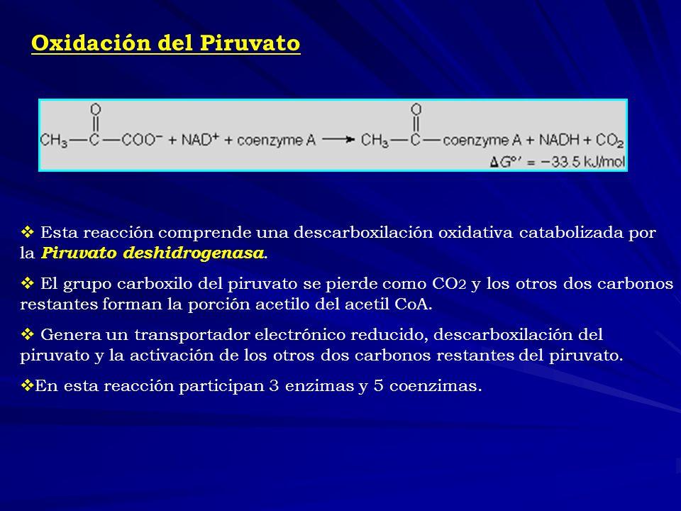 Oxidación del Piruvato Esta reacción comprende una descarboxilación oxidativa catabolizada por la Piruvato deshidrogenasa. El grupo carboxilo del piru