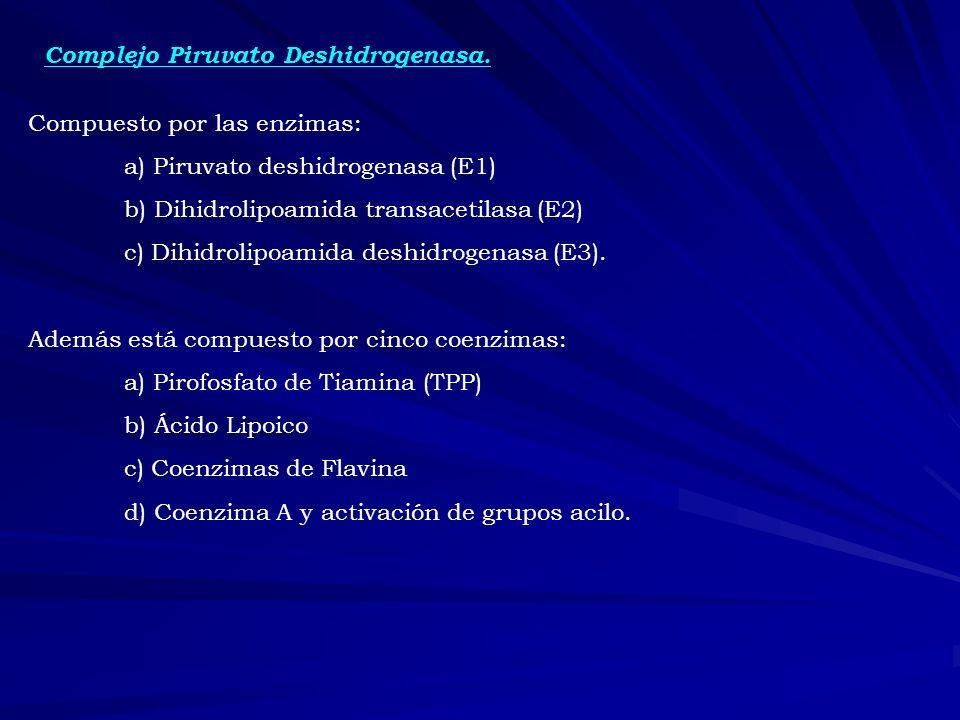 Complejo Piruvato Deshidrogenasa. Compuesto por las enzimas: a) Piruvato deshidrogenasa (E1) b) Dihidrolipoamida transacetilasa (E2) c) Dihidrolipoami