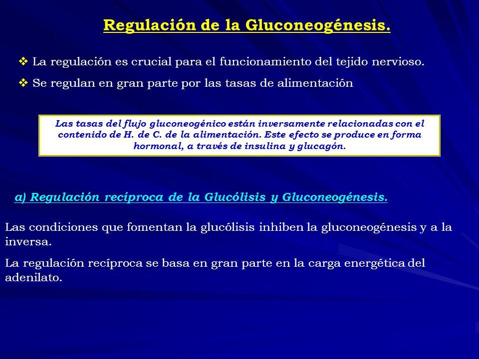 Regulación de la Gluconeogénesis. La regulación es crucial para el funcionamiento del tejido nervioso. Se regulan en gran parte por las tasas de alime