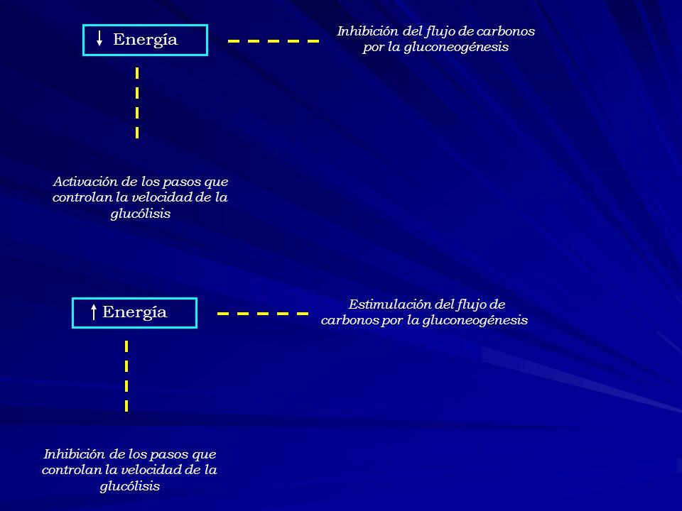 Energía Activación de los pasos que controlan la velocidad de la glucólisis Inhibición del flujo de carbonos por la gluconeogénesis Energía Inhibición