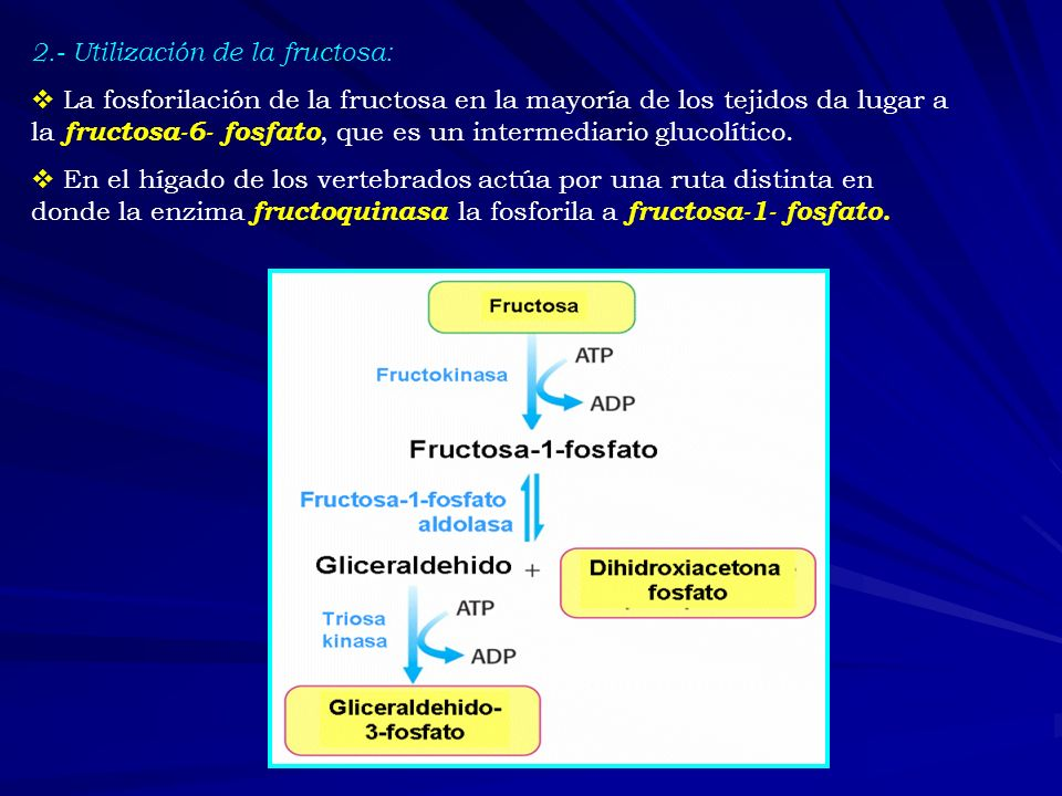 2.- Utilización de la fructosa: La fosforilación de la fructosa en la mayoría de los tejidos da lugar a la fructosa-6- fosfato, que es un intermediari