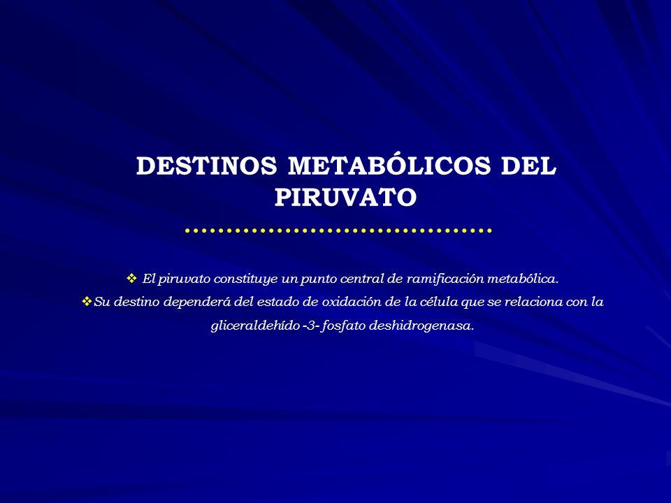 Metabolismo del Lactato NADH + H+ LACTATO
