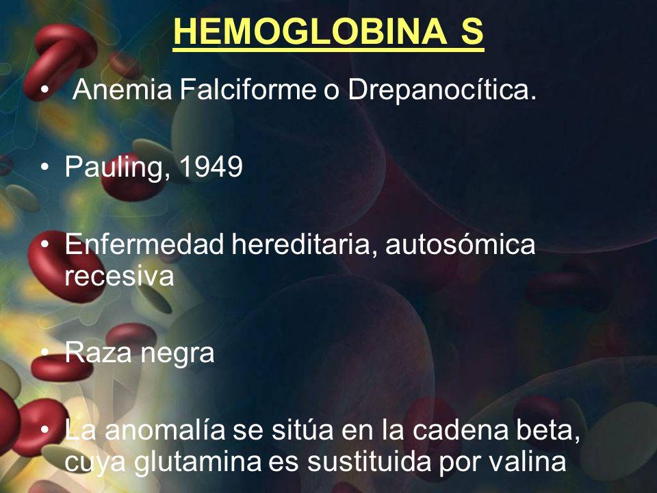 HEMOGLOBINA S Anemia Falciforme o Drepanocítica. Pauling, 1949 Enfermedad hereditaria, autosómica recesiva Raza negra La anomalía se sitúa en la caden