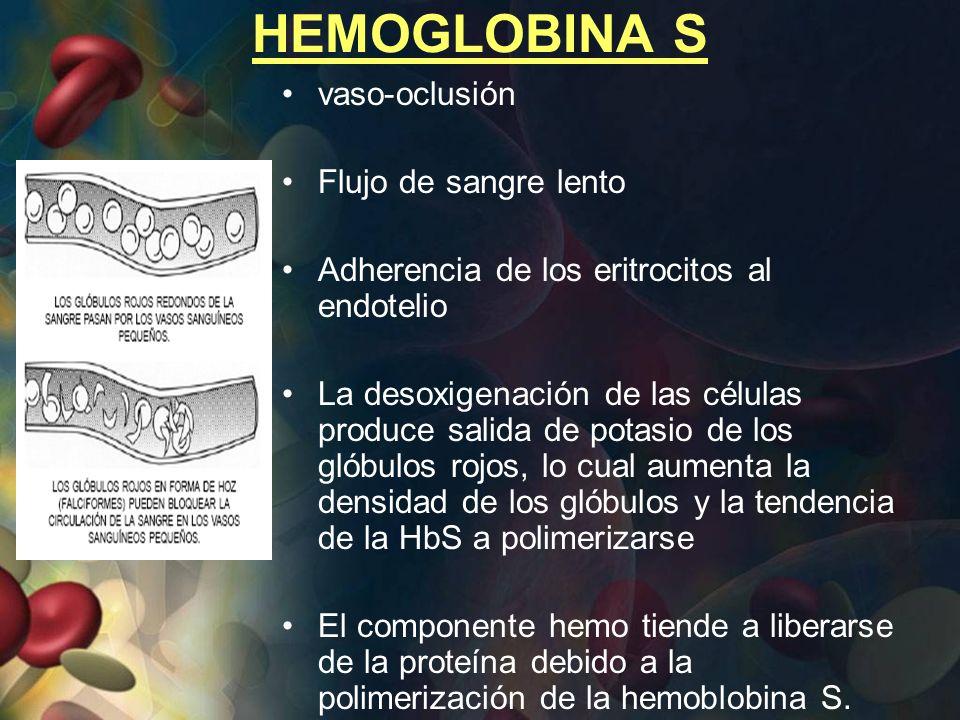 HEMOGLOBINA S vaso-oclusión Flujo de sangre lento Adherencia de los eritrocitos al endotelio La desoxigenación de las células produce salida de potasi