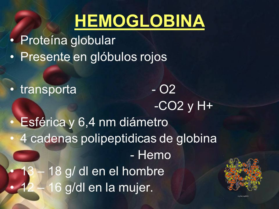 HEMOGLOBINA Proteína globular Presente en glóbulos rojos transporta - O2 -CO2 y H+ Esférica y 6,4 nm diámetro 4 cadenas polipeptidicas de globina - He