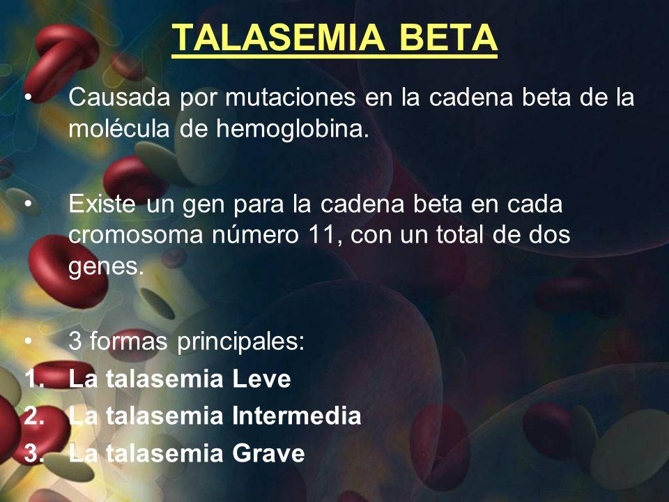 TALASEMIA BETA Causada por mutaciones en la cadena beta de la molécula de hemoglobina. Existe un gen para la cadena beta en cada cromosoma número 11,