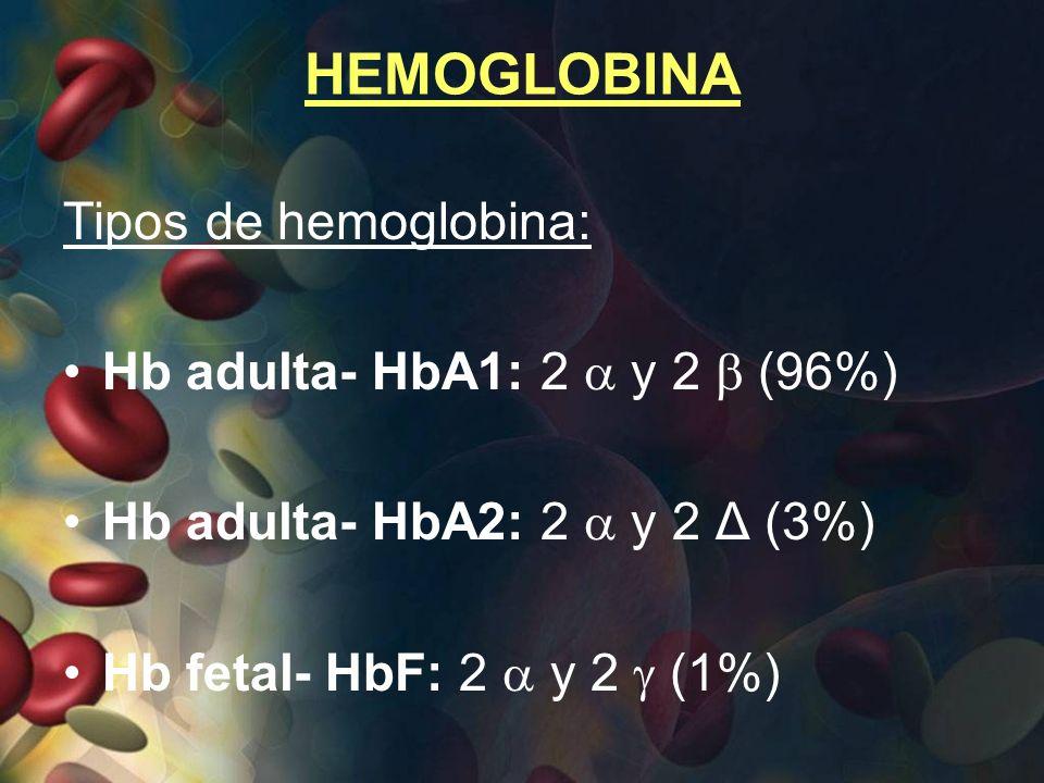 HEMOGLOBINA Tipos de hemoglobina: Hb adulta- HbA1: 2 y 2 (96%) Hb adulta- HbA2: 2 y 2 Δ (3%) Hb fetal- HbF: 2 y 2 (1%)