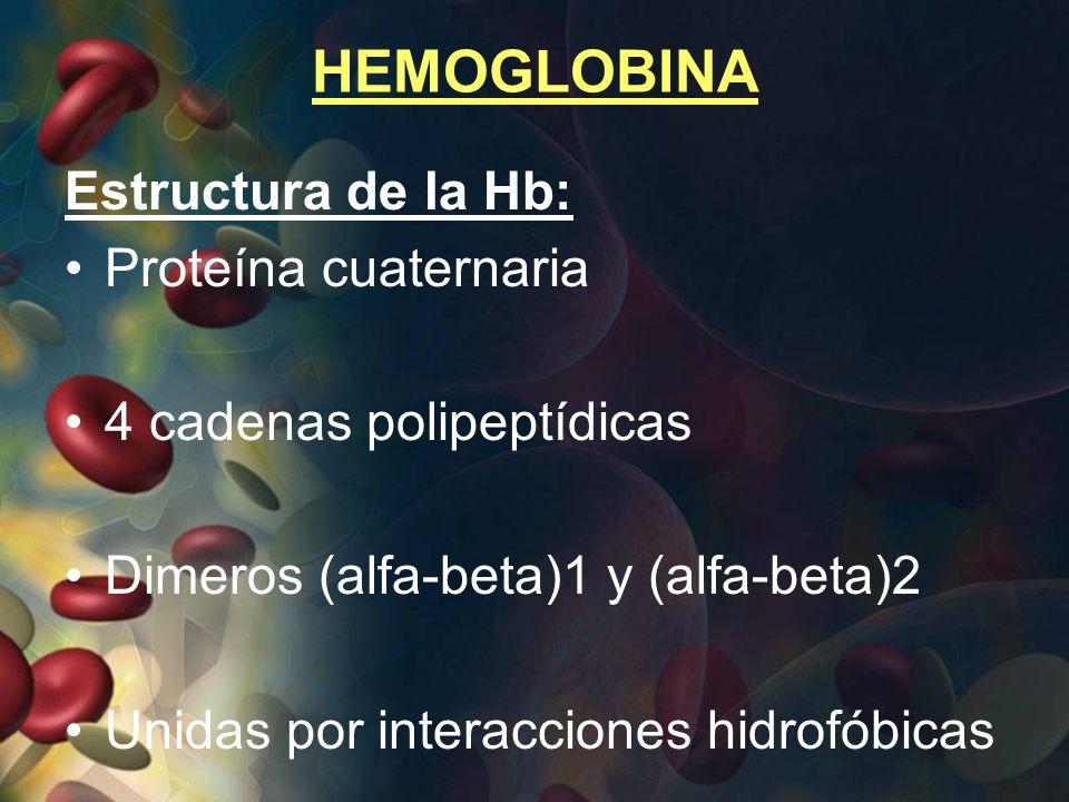 HEMOGLOBINA Estructura de la Hb: Proteína cuaternaria 4 cadenas polipeptídicas Dimeros (alfa-beta)1 y (alfa-beta)2 Unidas por interacciones hidrofóbic