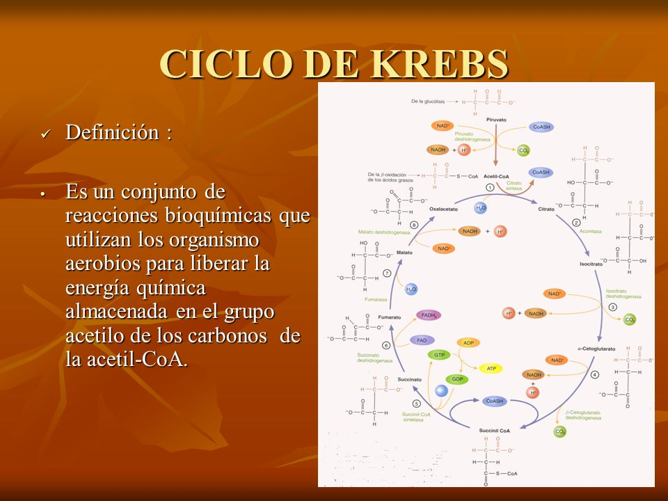 Definición : Definición : Es un conjunto de reacciones bioquímicas que utilizan los organismo aerobios para liberar la energía química almacenada en e