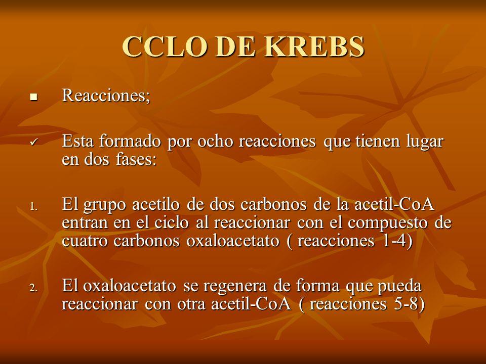 CCLO DE KREBS Reacciones; Reacciones; Esta formado por ocho reacciones que tienen lugar en dos fases: Esta formado por ocho reacciones que tienen luga