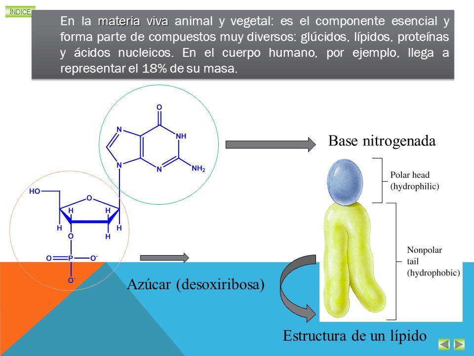 ÍNDICE materia viva En la materia viva animal y vegetal: es el componente esencial y forma parte de compuestos muy diversos: glúcidos, lípidos, proteínas y ácidos nucleicos.