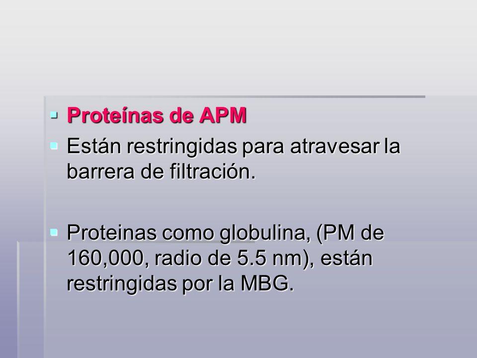 Proteínas de APM Proteínas de APM Están restringidas para atravesar la barrera de filtración. Están restringidas para atravesar la barrera de filtraci
