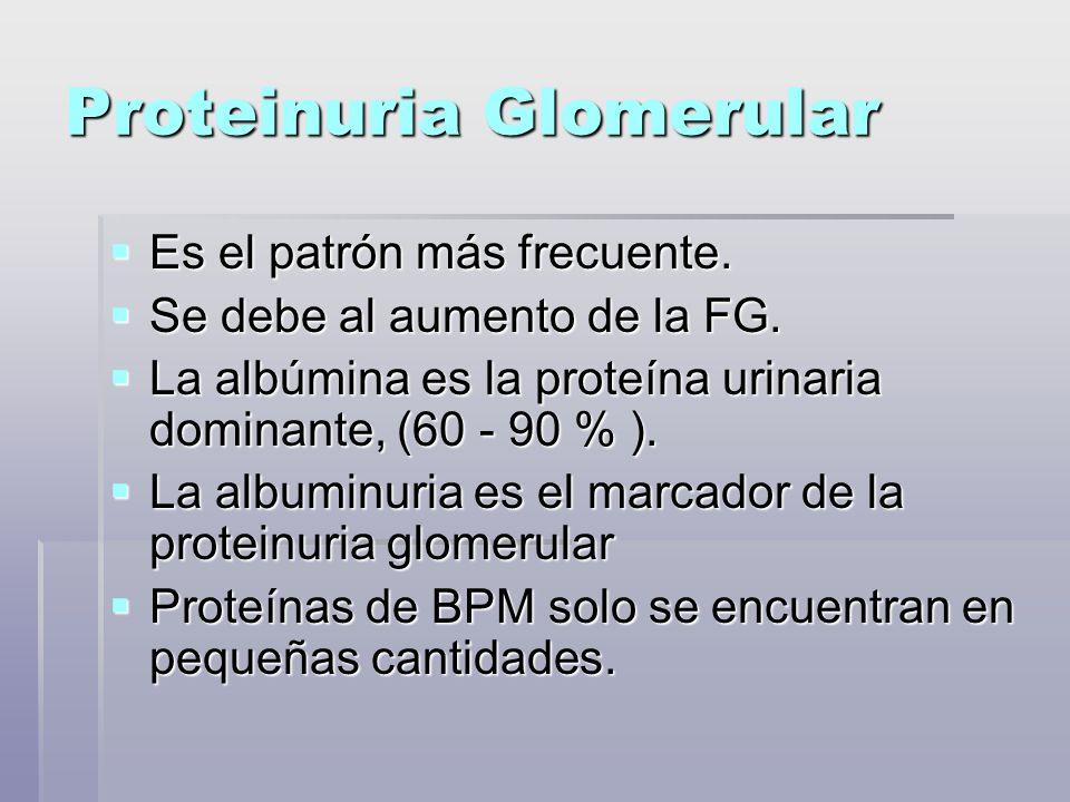 Proteinuria Glomerular Es el patrón más frecuente. Es el patrón más frecuente. Se debe al aumento de la FG. Se debe al aumento de la FG. La albúmina e