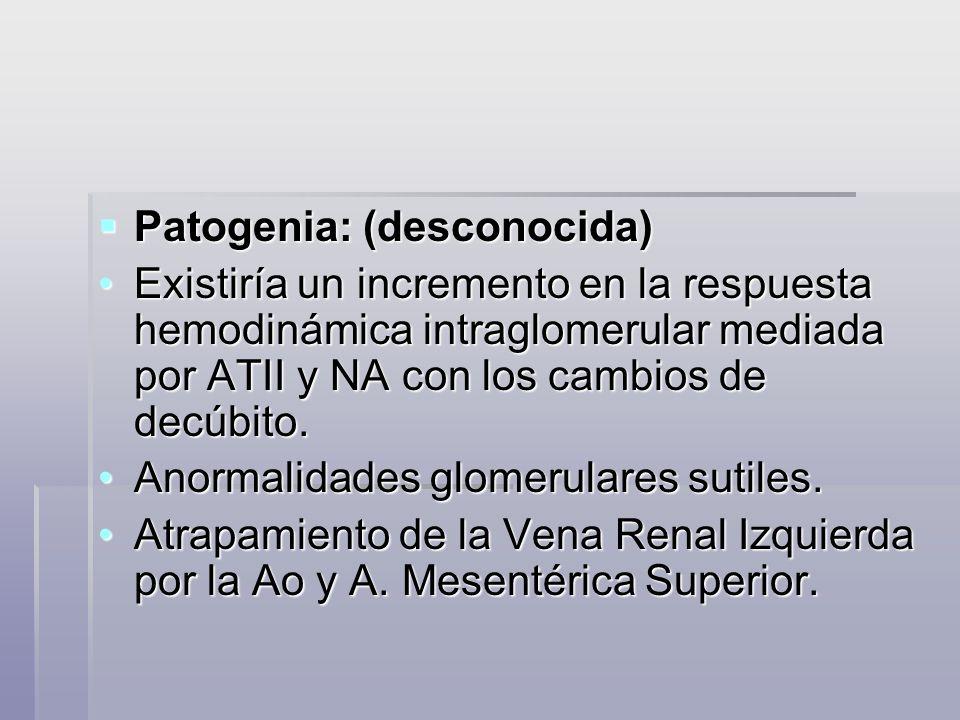 Patogenia: (desconocida) Patogenia: (desconocida) Existiría un incremento en la respuesta hemodinámica intraglomerular mediada por ATII y NA con los c
