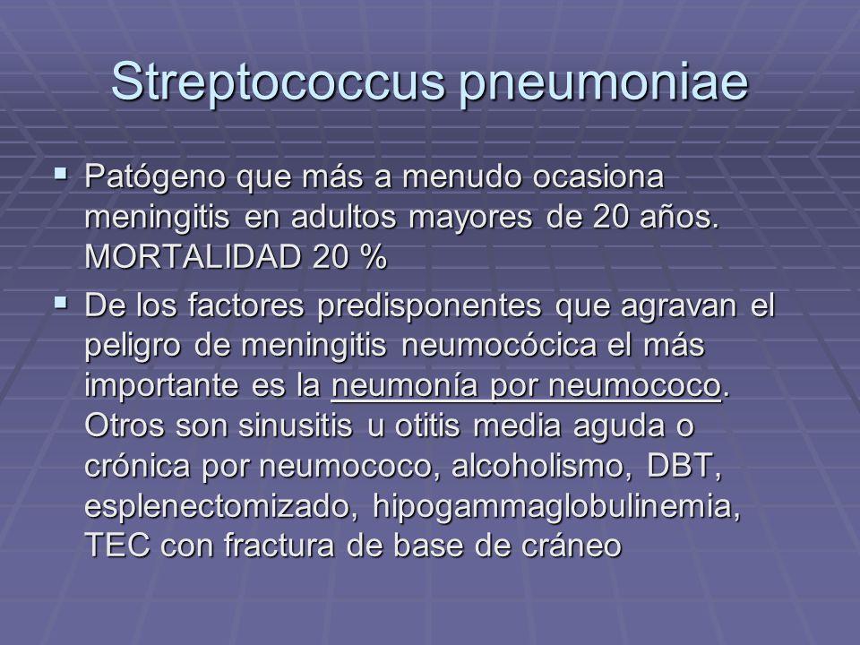 Streptococcus pneumoniae Patógeno que más a menudo ocasiona meningitis en adultos mayores de 20 años. MORTALIDAD 20 % Patógeno que más a menudo ocasio