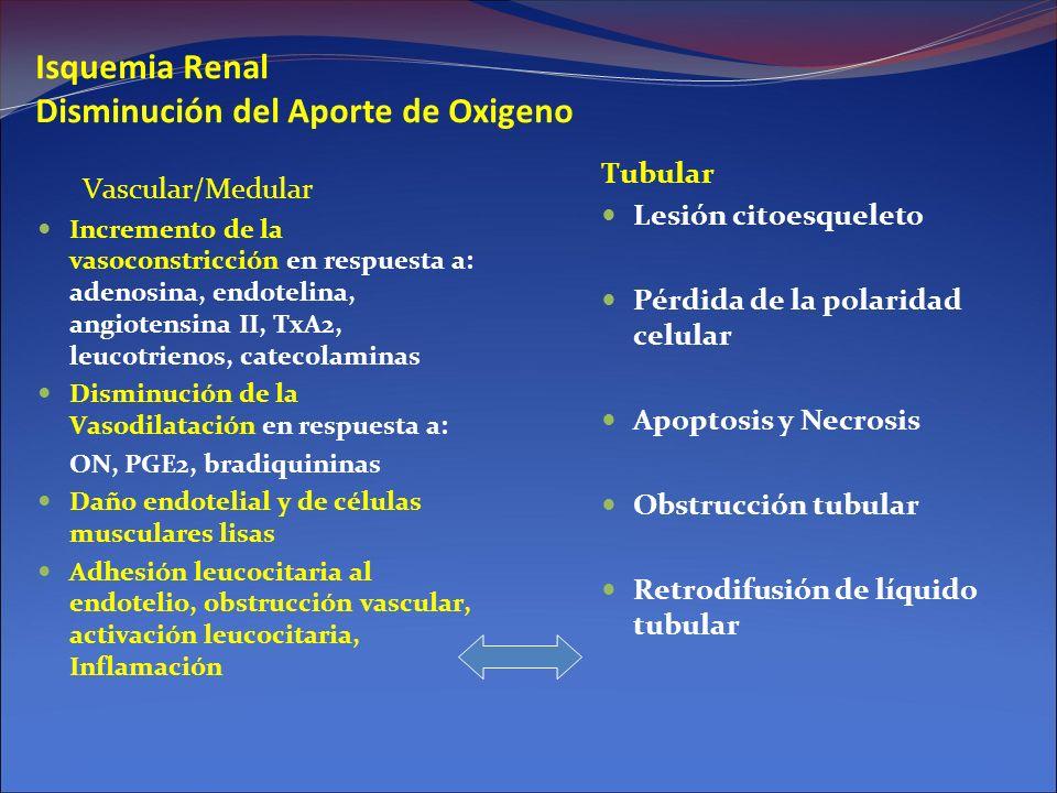 Isquemia Renal Disminución del Aporte de Oxigeno Vascular/Medular Incremento de la vasoconstricción en respuesta a: adenosina, endotelina, angiotensin