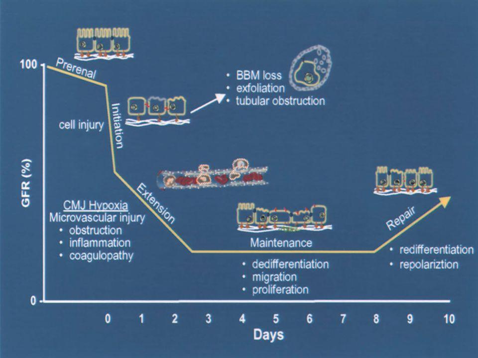 J Am Soc Nephrol 14: 2178–2187, 2003 Fases de FRA Objetivos Terapéuticos: A-Prevención B- Limitar Extensión C-Tto IRA establecida