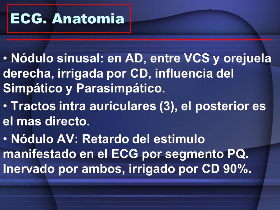 Nódulo sinusal: en AD, entre VCS y orejuela derecha, irrigada por CD, influencia del Simpático y Parasimpático. Tractos intra auriculares (3), el post