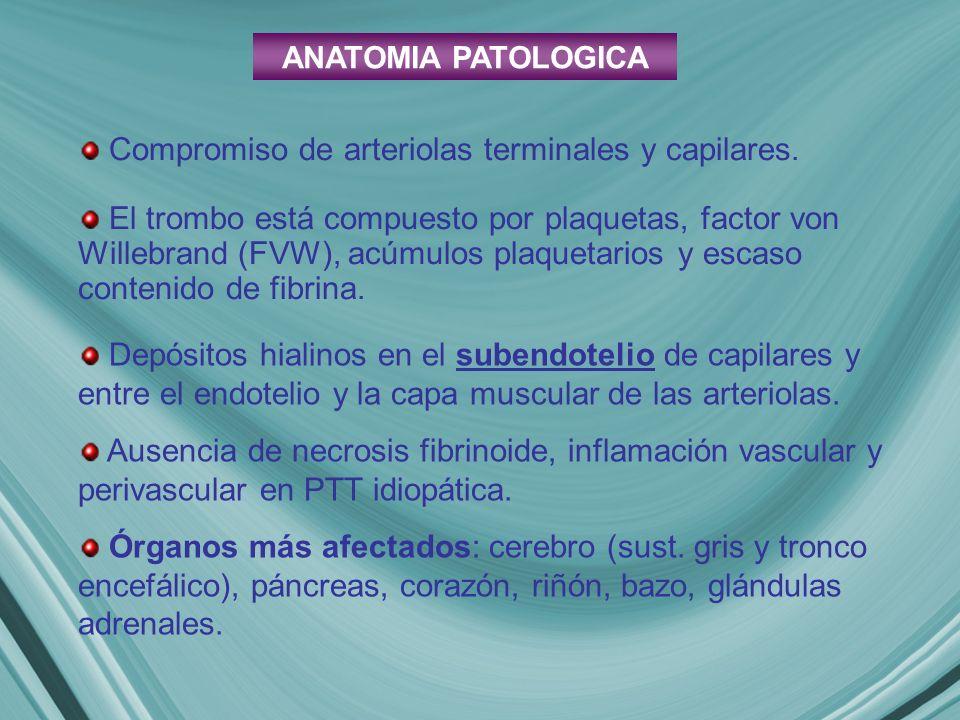 ANATOMIA PATOLOGICA Depósitos hialinos en el subendotelio de capilares y entre el endotelio y la capa muscular de las arteriolas. Ausencia de necrosis