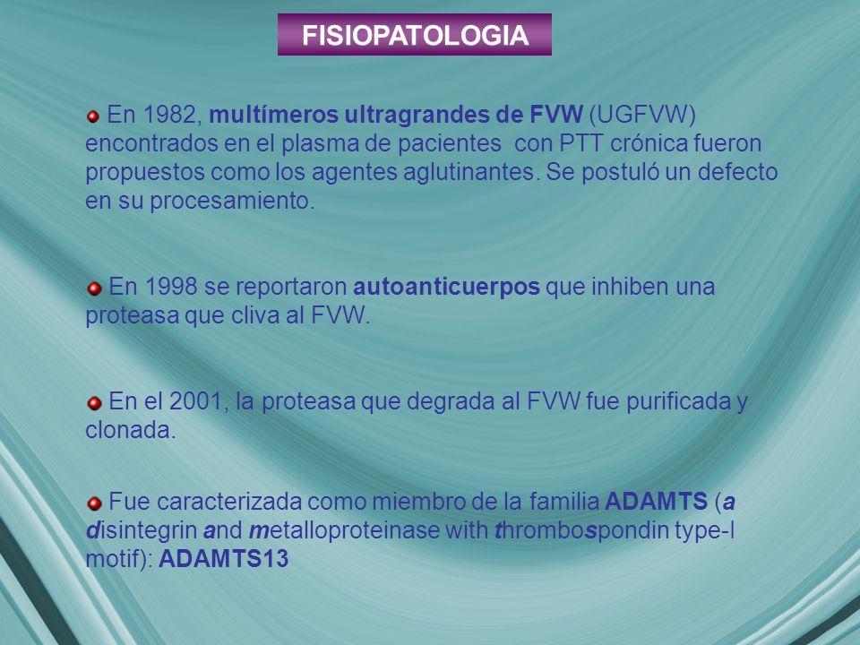 FISIOPATOLOGIA En 1982, multímeros ultragrandes de FVW (UGFVW) encontrados en el plasma de pacientes con PTT crónica fueron propuestos como los agente